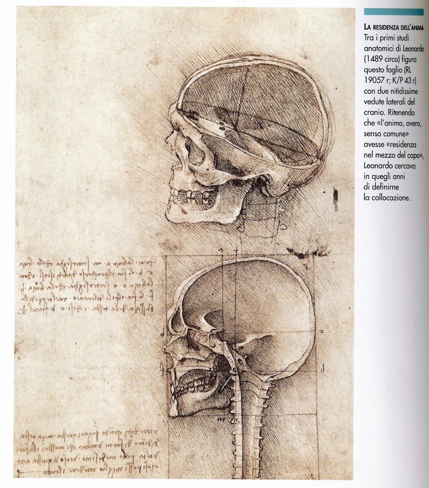 Gemütlich Leonardo Da Vinci Skizzen Anatomie Zeitgenössisch ...