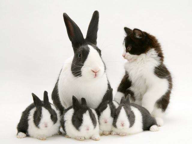 Bunny's and cat.