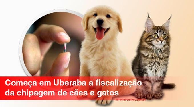 Começa a fiscalização da chipagem de animais em Uberaba