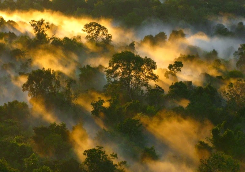 The Amazon canopy at dawn, in Brazil. (Credit: Peter van der Sleen) Click to Enlarge.