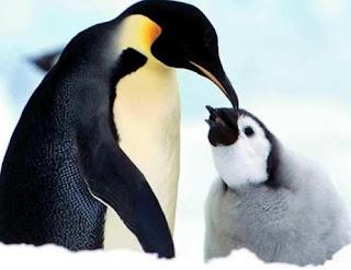 Pingüino hembra y su cria