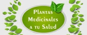 Nuestra colaboradora experta en PLANTAS MEDICINALES, Andy Pindur, te aconseja