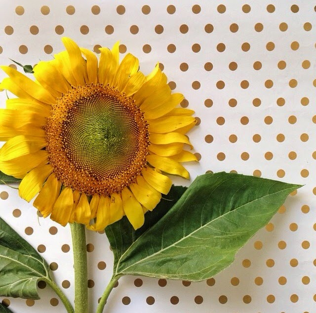 gold polka dots, sunflower