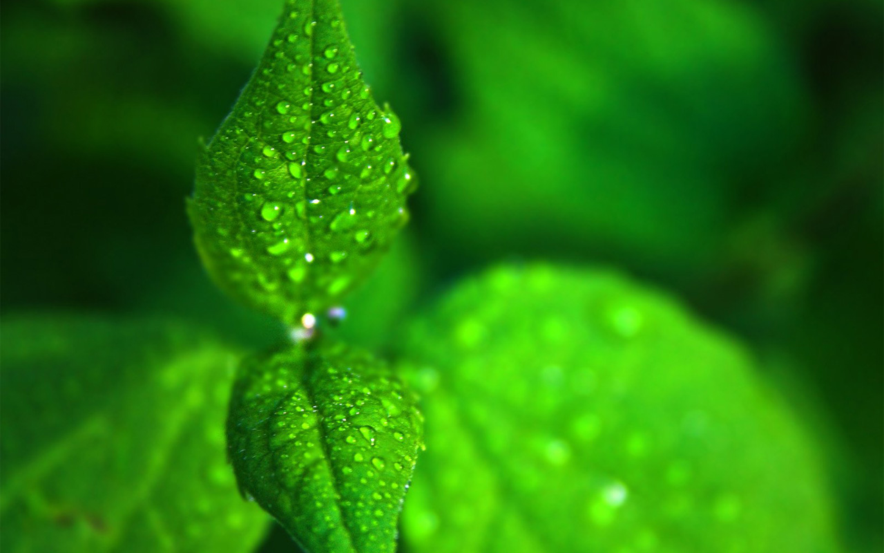 Fresh Green Leaf Wallpapers   1000 Desktop Wallpaper