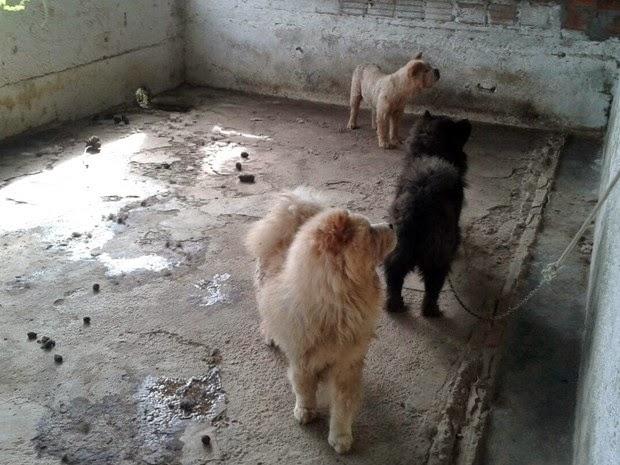 Cerca de 36 cães foram resgatados na última terça-feira (3). (Foto: Aldo Matos/Acorda Cidade)