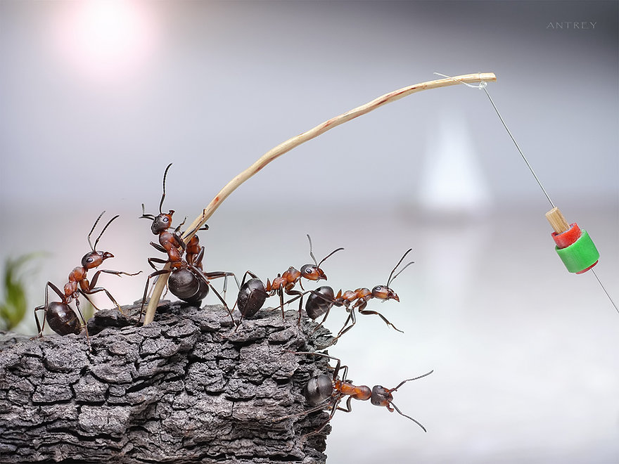05-Fishing-Trip-Andrey-Pavlov-Photographs-of-Ants-an-Affordable-Journey-to-a-Parallel-World
