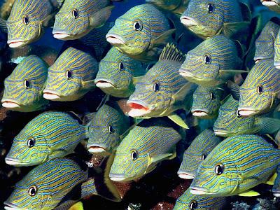 Galería Imágenes de peces, crustáceos y moluscos (1 de 2) - imagenes de animales peces