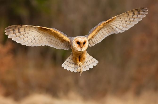 Animals Photography by Robert Adamec Seen On www.coolpicturegallery.us