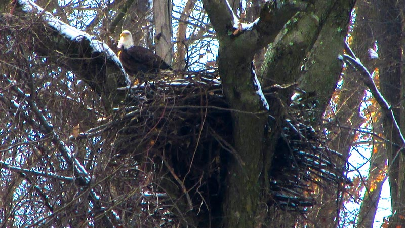 hays chat rooms Hays bald eagles begin rebuilding mary ann thomas  according to a longtime watcher of the hays birds known as eagle streamer in local internet chat rooms.