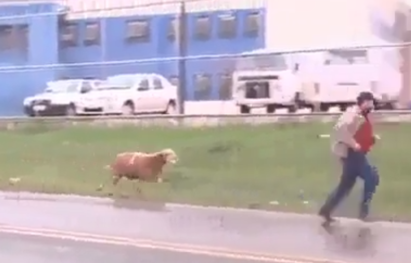 http://www.dailymotion.com/video/x19cm90_hahaha-very-funny-goat_fun