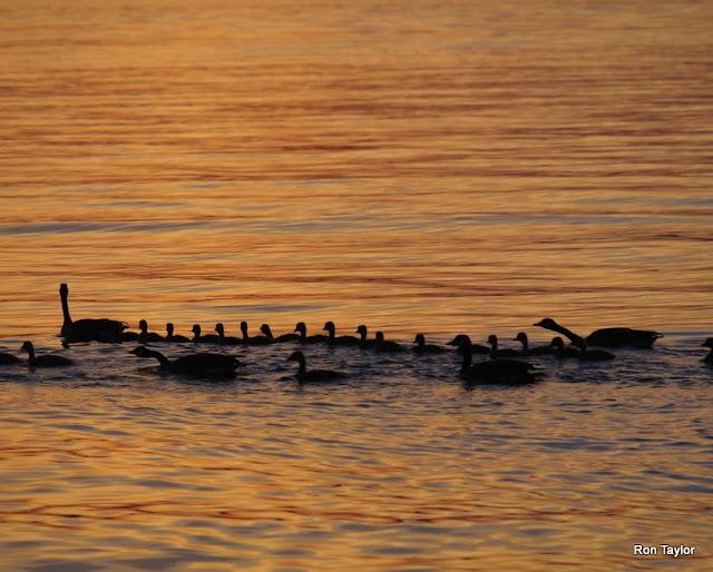 Ontario Saves Experimental Lakes Area