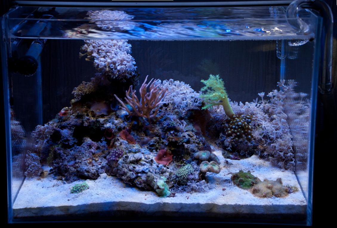 сайдекс инструкция по применению в аквариуме