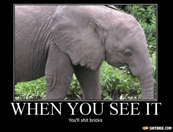 onderzoek olifanten resultaten
