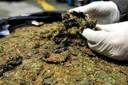 Hallan 124 kilos de marihuana en una vivienda de Uyuni