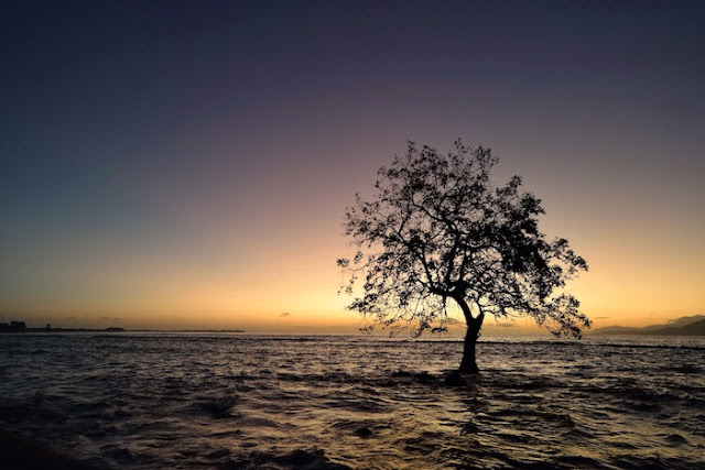 "<a href=""http://mataram.info/things-to-do-in-bali/visitindonesia-banda-marine-life-the-paradise-of-diving-topographic-point-inward-fundamental-maluku/"">Indonesia</a>best destinations : Sunrise As Well As The Tree: Mali <a href=""http://mataram.info/"">Beach in Indonesia</a>, Alor"