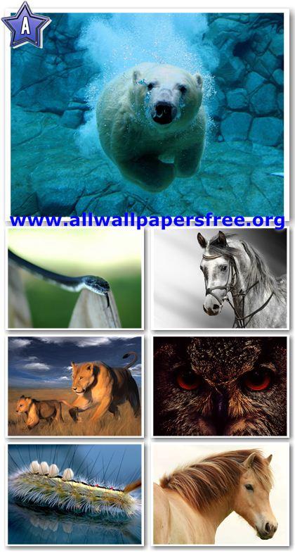 20 Amazing Animals HD Wallpapers 1920 X 1440