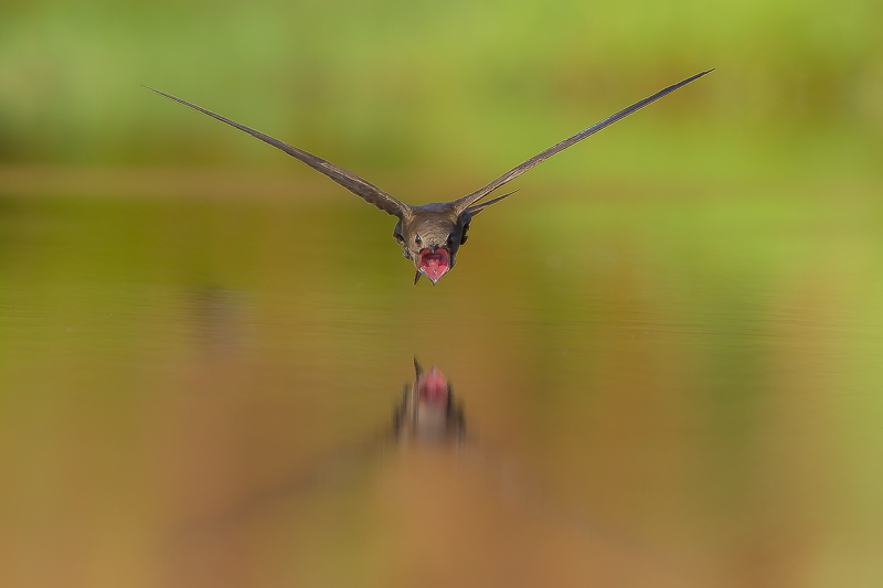 1st Prize - HBW World Bird Photo Contest 2014