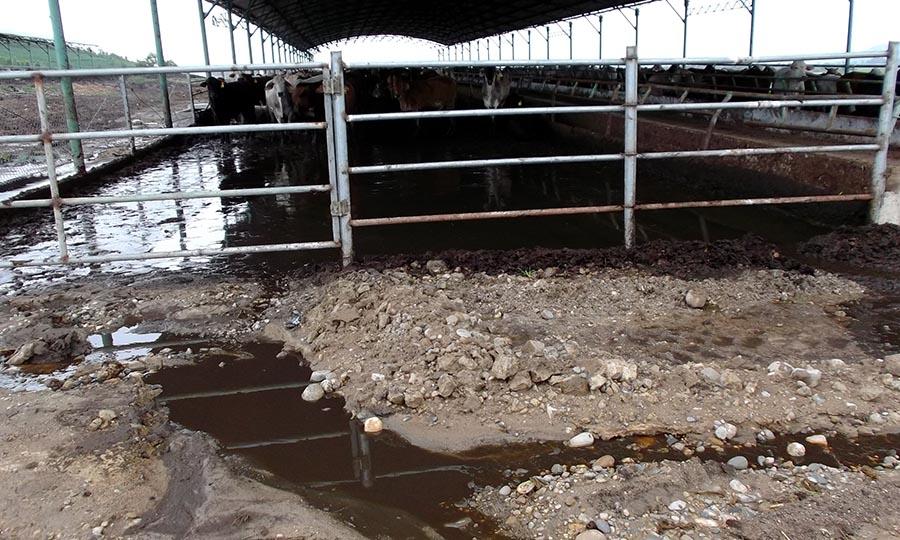 """Gia Lai: Vụ """"trại bò gây ô nhiễm"""" - Hoàng Anh Gia Lai cam kết không để tái diễn"""