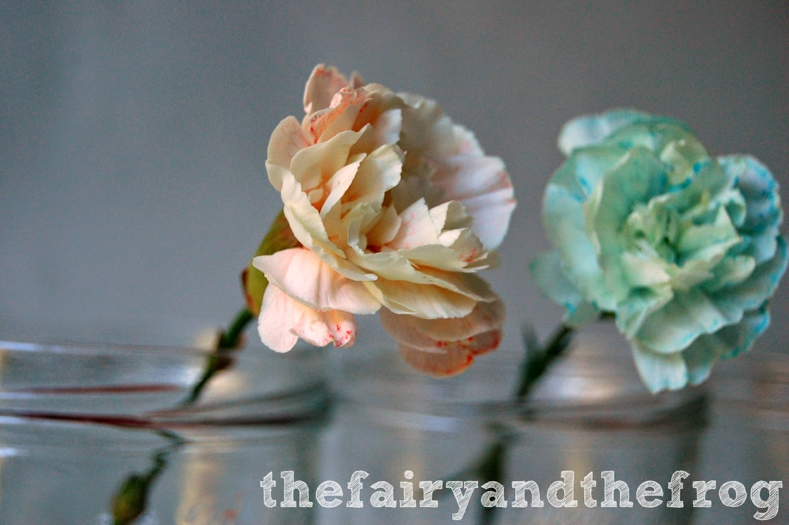 The fairy and the frog: Colour changing flower science experiment