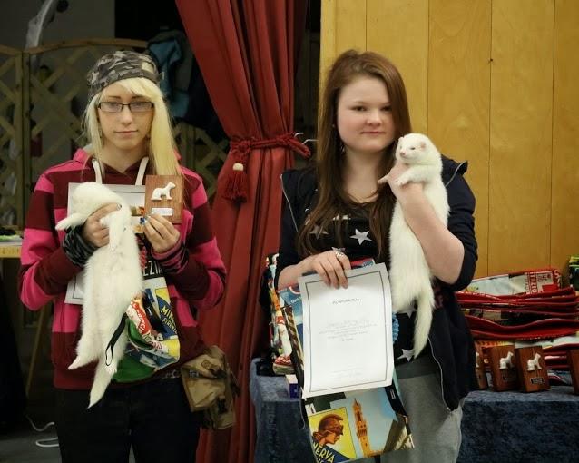 frettinäyttely+voittaja+luokan 1+ferret+show+winner+wcwfs