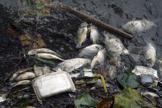Chết vì ô nhiễm môi trường Ca+7+6102011