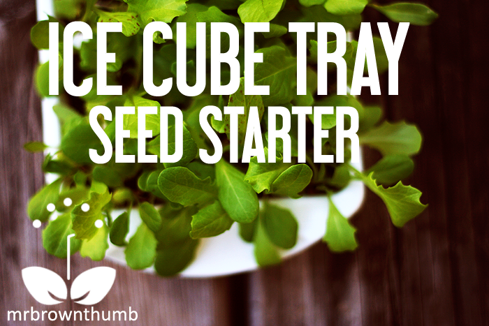 Ice cube seed tray seed starter