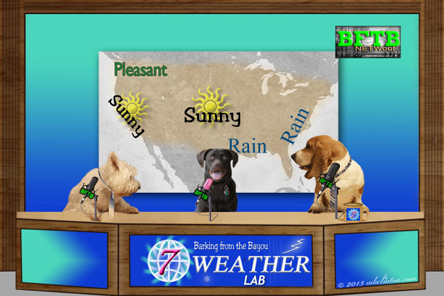 Dog news set with the weather forecast map