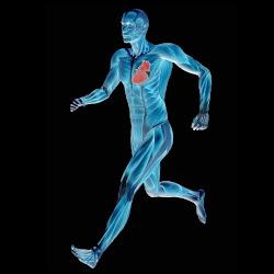 olahraga untuk [penderita sakit jantung, tips dan artikel seputar [enyakit jantung, gambar orang sakit jantung