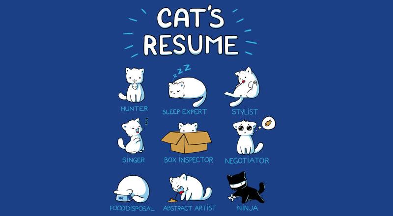 Кошачье резюме. Кем могут работать коты