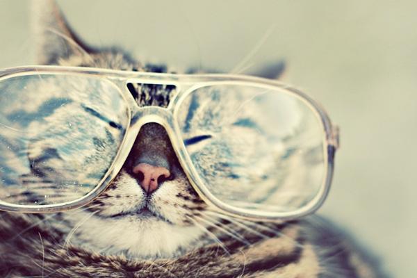 hipster cat nerd