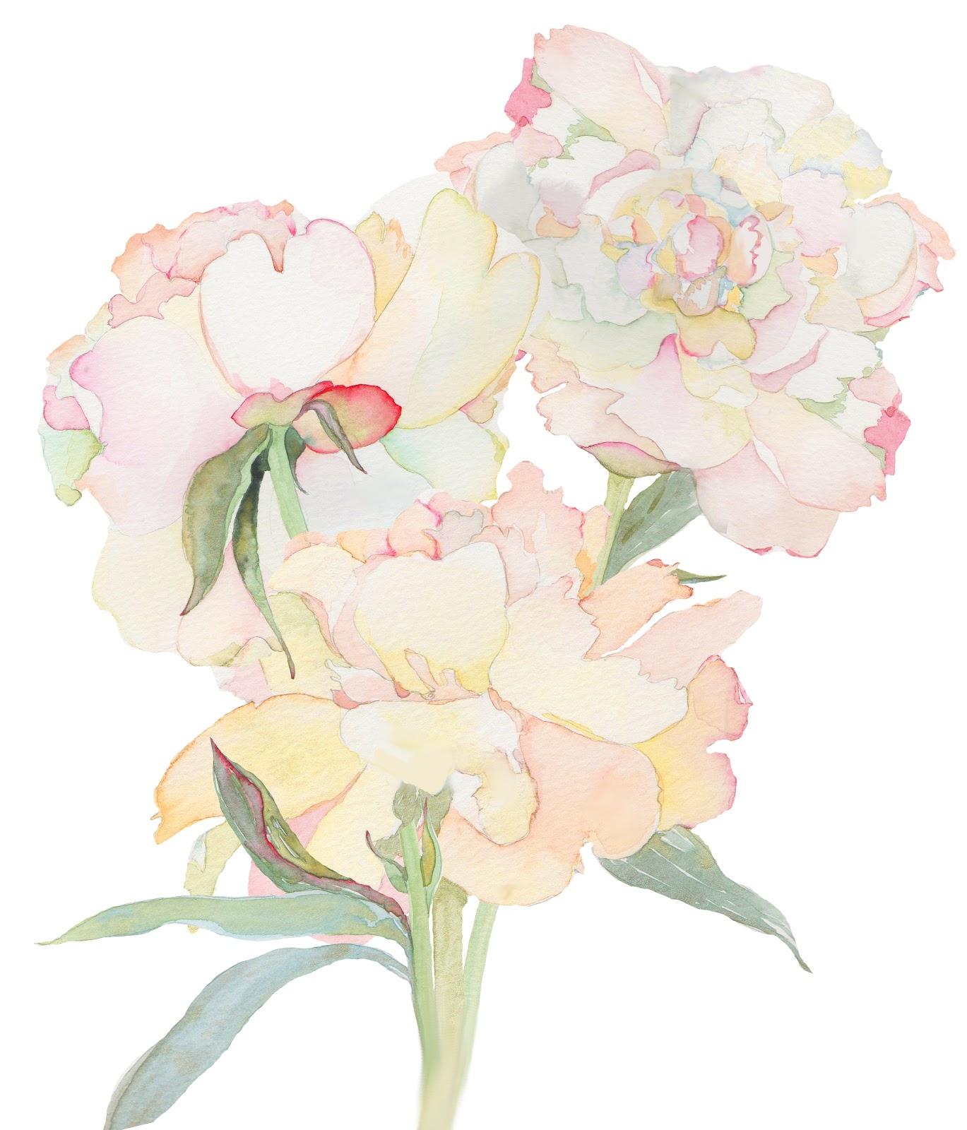 Watercolor Flower Painting: DEEP COVE FLOWERS: Blushing Peonies