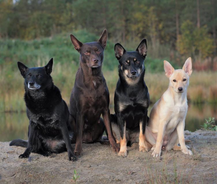 Kelpiet Råtta, Repo, Hertta ja Hurma