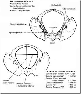 Welcome Blog Indah Fedri: Ukuran – ukuran Panggul dan ...