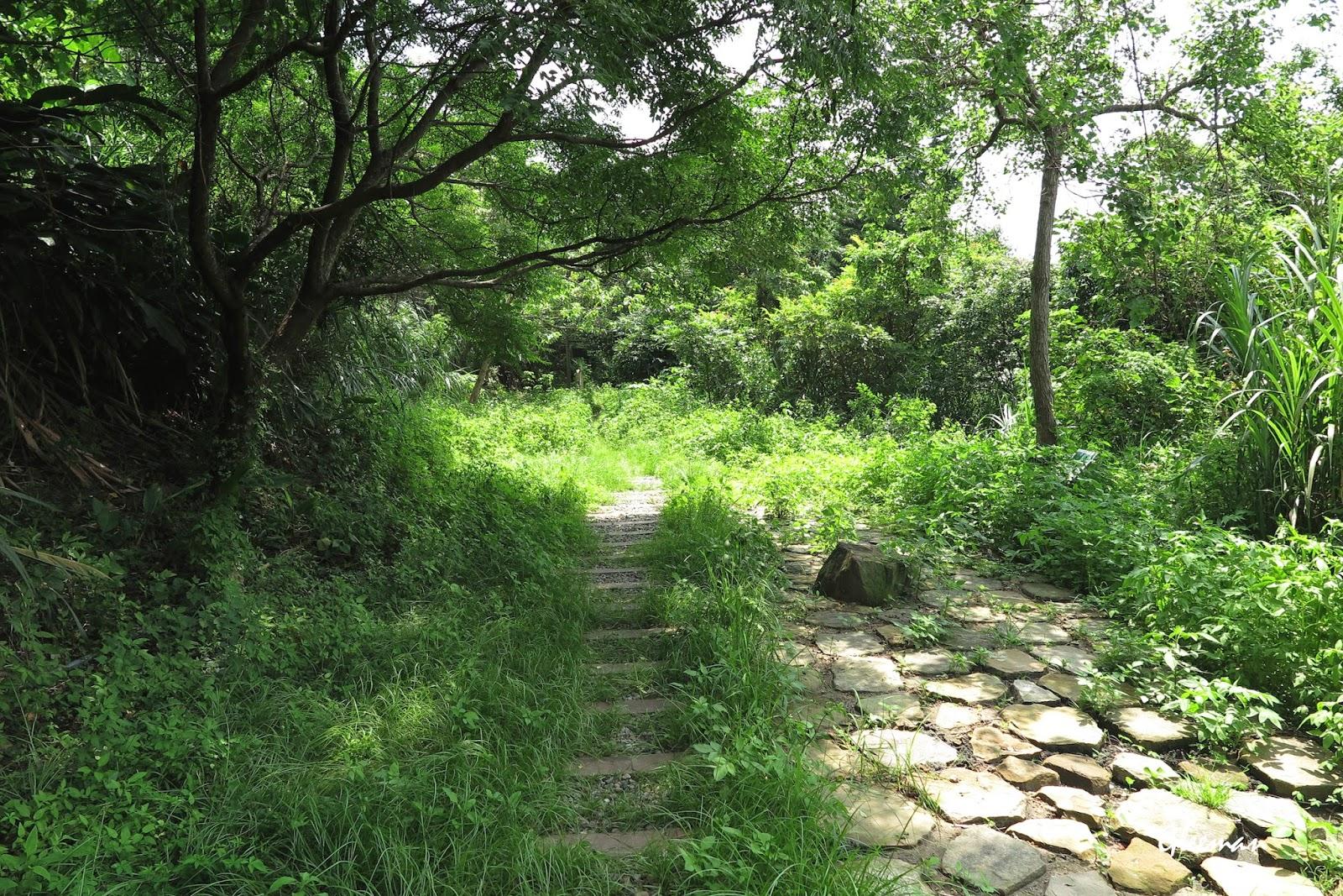 隨著在這裡的兩塊新闢的空地的石縫間草又長出來,山紅頭又開始會出現在附近活動了
