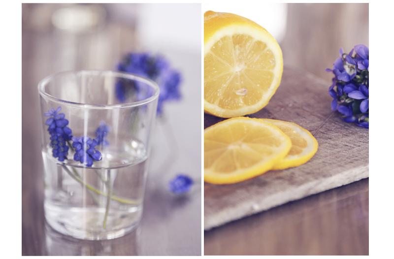 muscaris violettes et citron