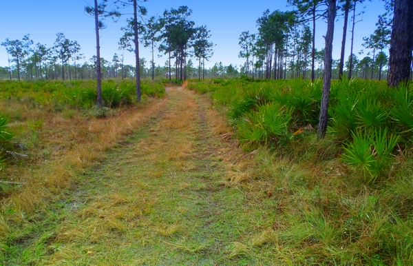 three lakes wildlife management area for hunting in florida by http://DearMissMermaid.com copyright by Dear Miss Mermaid