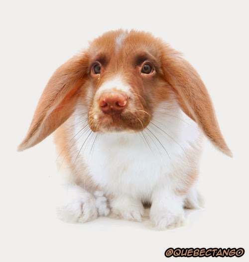09-Dog-and-Rabbit-a-Dobbit-Graphics-Designer-Digital-Taxidermist-Animangler-www-designstack-co