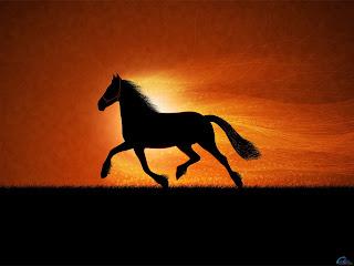 ảnh động vật ngộ nghĩnh về ngựa, anh dong vat ngo nghinh ve ngua