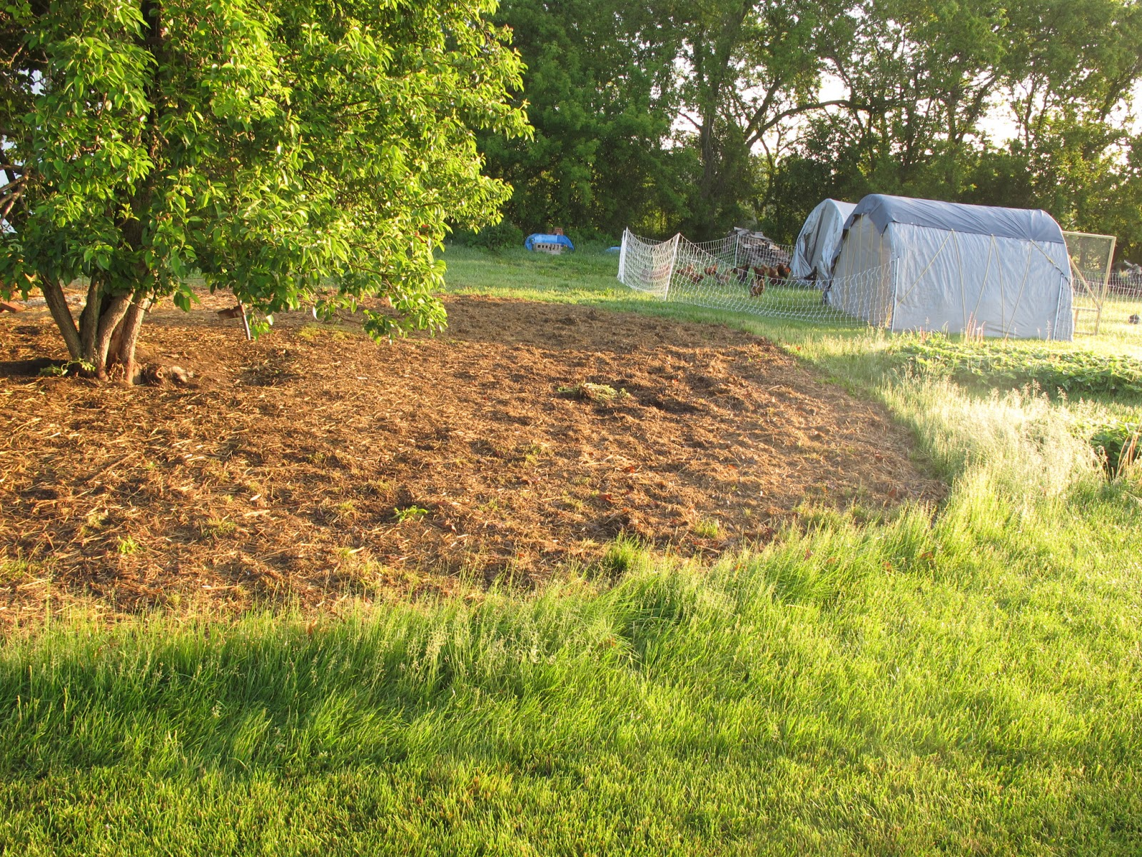 Joe\'s Garden Journal: Food Forest/Chicken Paddock Update 6/11/13