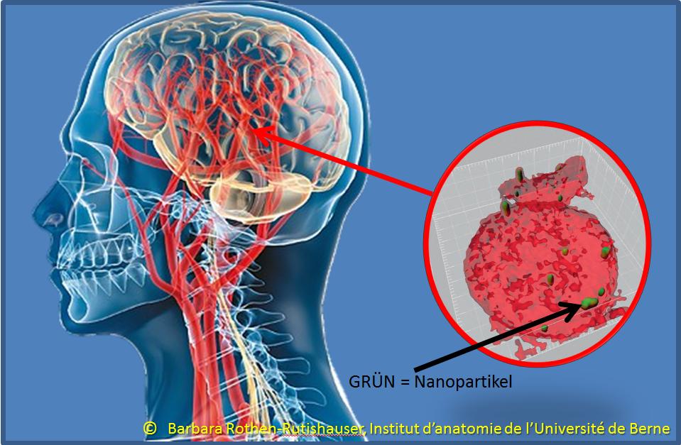 Eggetsberger-Info, Blogger, Blog: Gefahr: Nanopartikel dringen auch ...