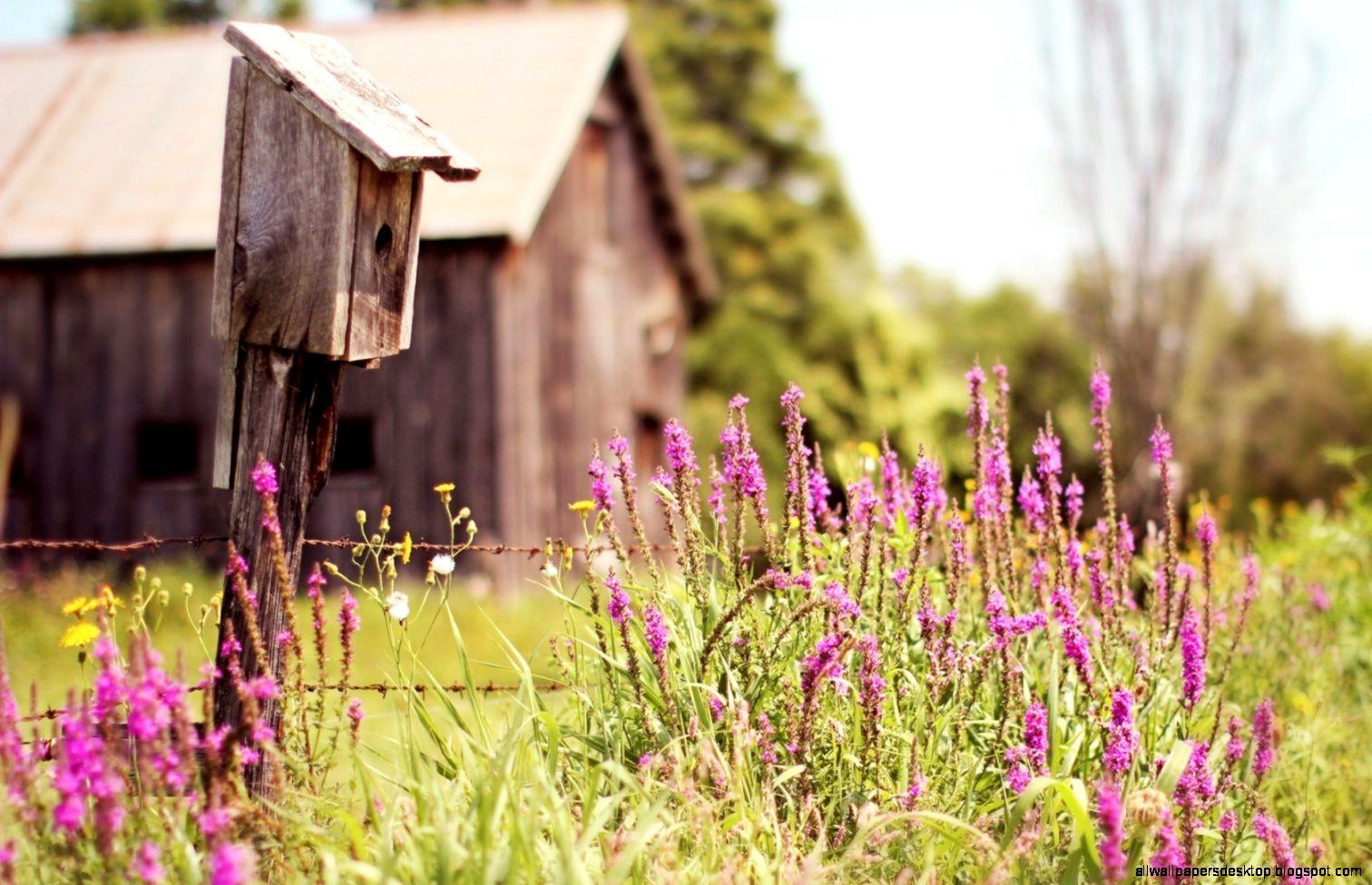 View Original Size House Flowers Field Summer Nature Hd Wallpaper All Desktop