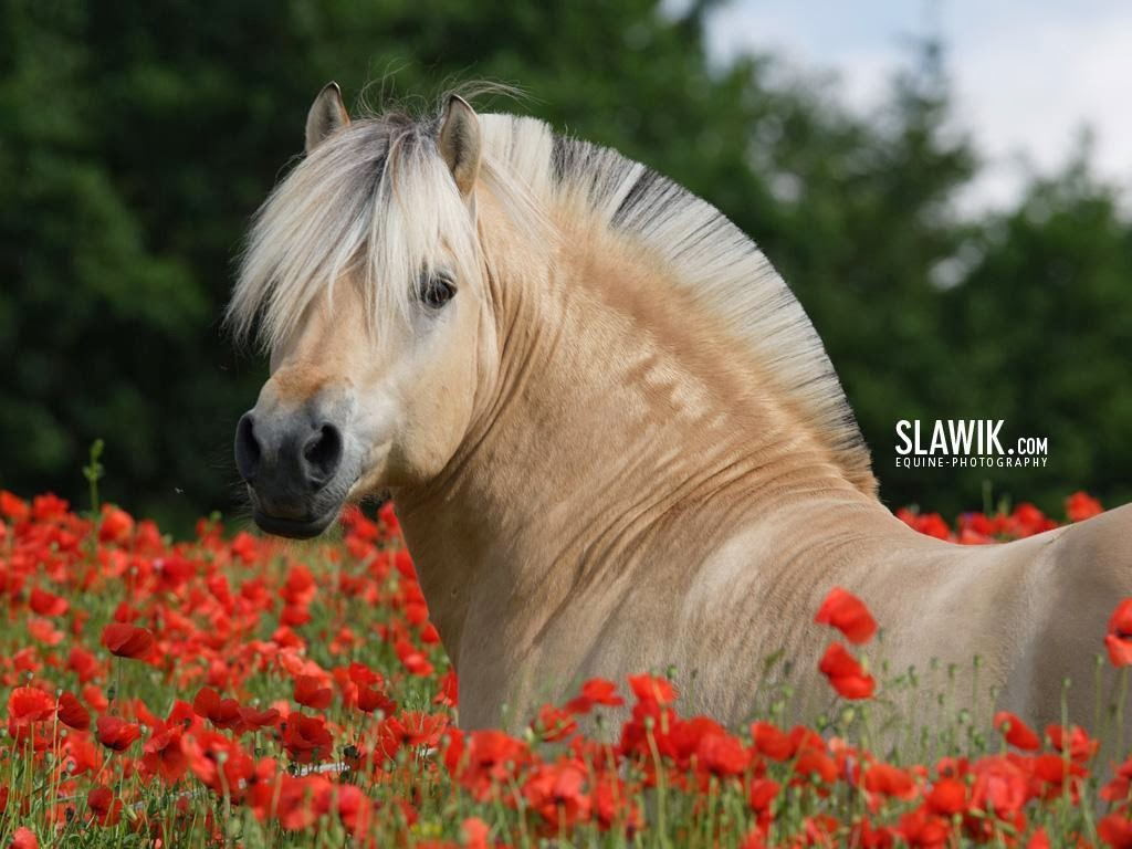 horse wallpaper awesome pair - photo #27