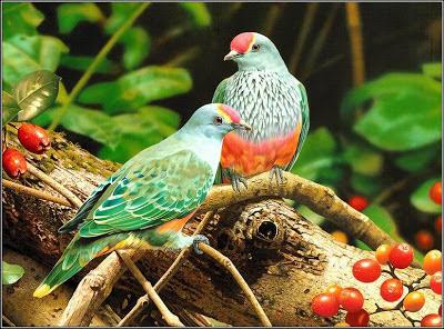%D8%B7%D9%8A%D9%88%D8%B15 صور رمانسية طبيعية لأجمل الطيور 2014