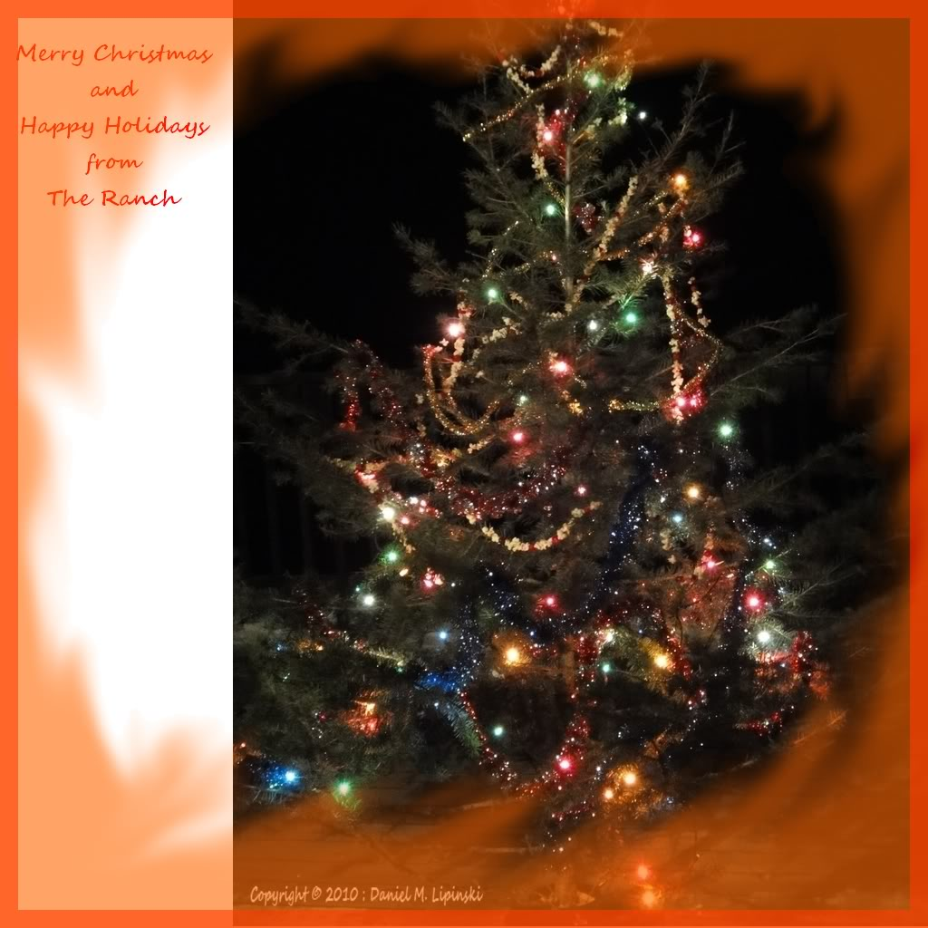Free Greeting Cards Download Cards For Festival Christmas Tree