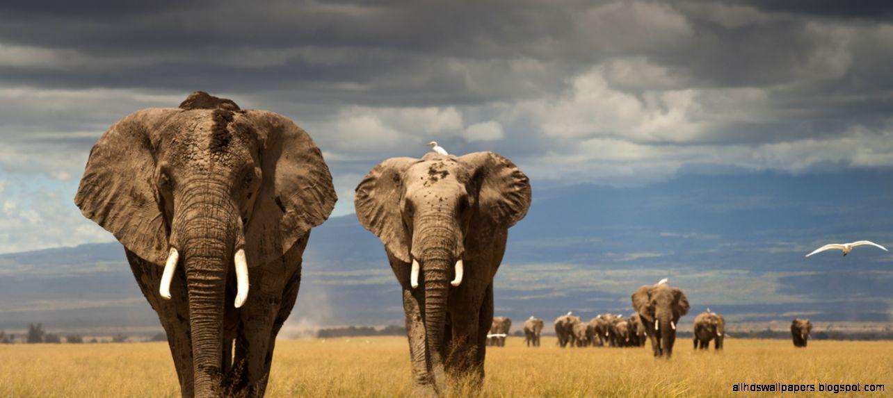 Africas Poaching Crisis – AWF