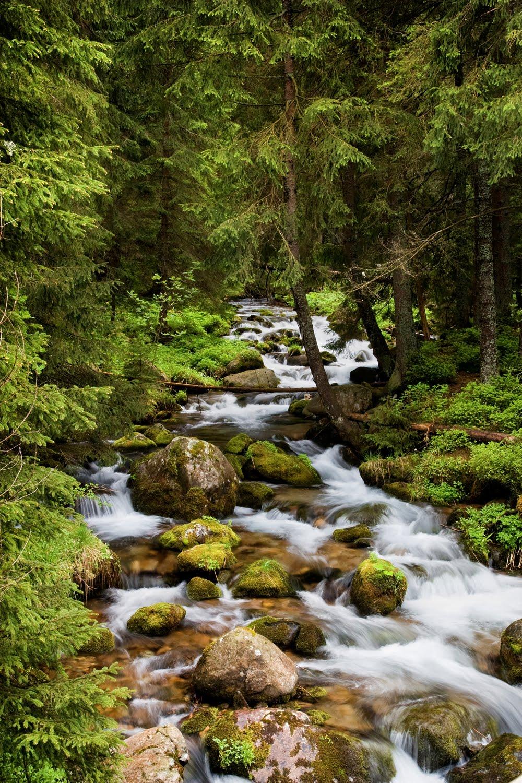 Banco de im 193 genes im 225 genes de r 237 os en el bosque de los pinos