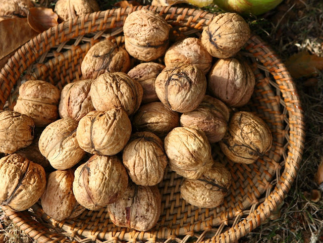 Грецкий орех бизнес на выращивании