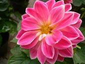 Per tutti quelli che amano piante e fiori