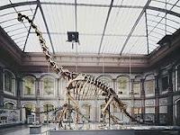 Esqueleto de Giraffatitan.