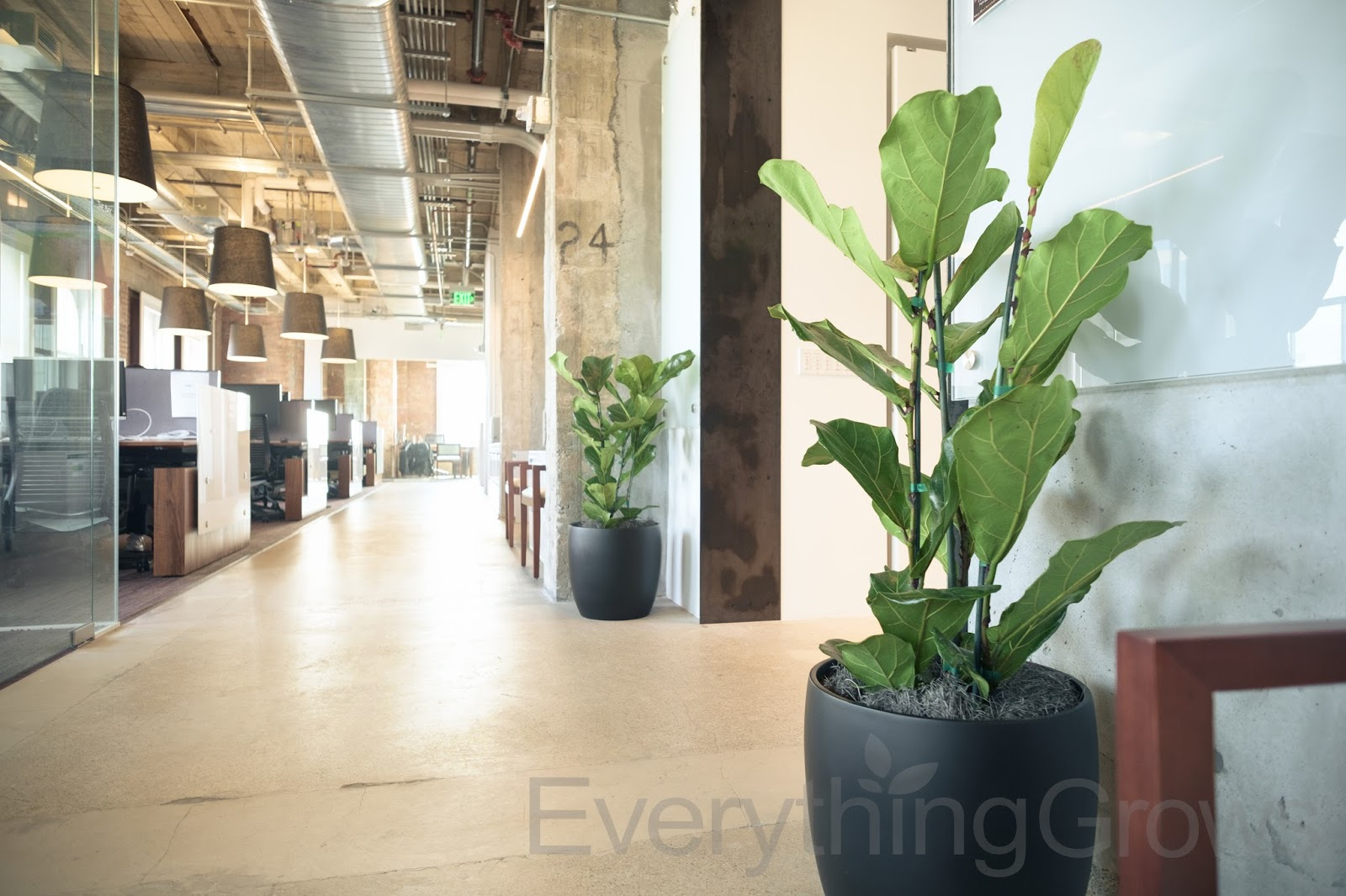 Awesome Plants For Office Space. Have A Vision In Mind To Transform Your Office  Space Everything